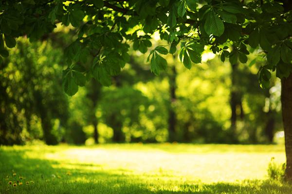 Der Stress Blog | Der Wald - stiller Kraftplatz und Meditationszimmer